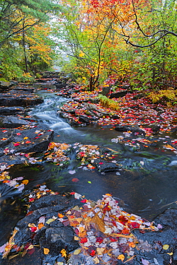 Creek in autumn, Duck Brook, Acadia National Park, Maine