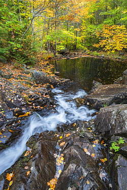Creek flowing into pond in autumn, Duck Brook, Acadia National Park, Maine