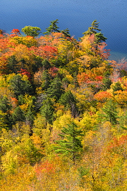 Deciduous forest and pond in autumn, Jordan Pond, Mount Desert Island, Acadia National Park, Maine