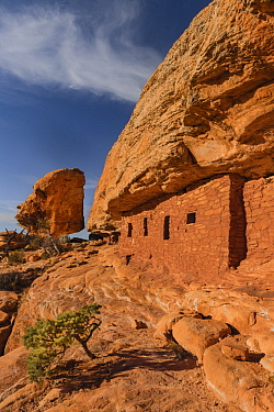 Ancestral Puebloan ruins, Road Canyon, Bears Ears National Monument, Utah