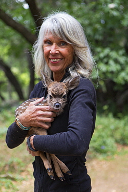 Mule Deer (Odocoileus hemionus) conservationist, Diane Nicholas, holding three day old orphaned fawn, Kindred Spirits Fawn Rescue, Loomis, California