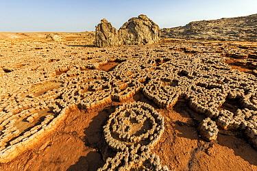 Salt mosaic from dry hot springs, Danakil Depression, Ethiopia