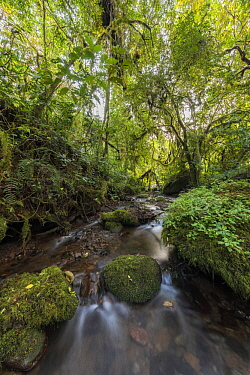 Stream in Harenna Forest, Bale Mountains National Park, Ethiopia