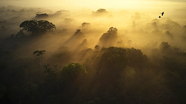 Rainforest at sunrise, Sani Lodge, Ecuador