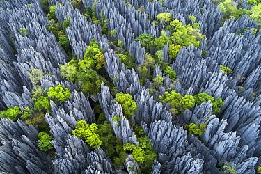 Limestone pinnacles, Tsingy de Bemaraha National Park, Madagascar