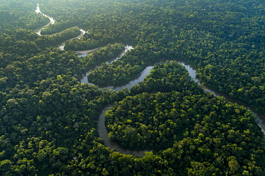 River in rainforest, Tiputini River, Amazon Basin, eastern Ecuador