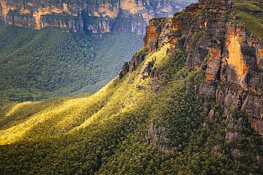 Gum Tree (Eucalyptus sp) forest and sandstone cliffs, Lockleys Pylon, Grose Valley, Blue Mountains National Park, New South Wales, Australia