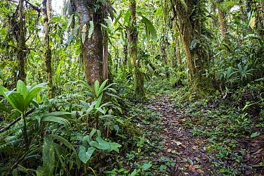 Tropical rainforest with path, northern Ecuador
