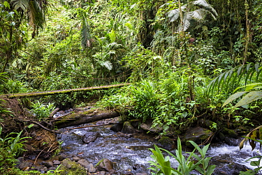Creek with suspension bridge in rainforest, Baeza, northern Ecuador