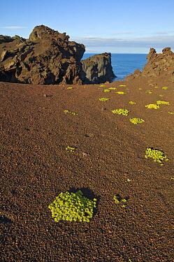 Lava rocks and tufa, Heimaey, Iceland