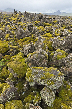 Lava fields covered with thick layer of moss, Snaefellsnes Peninsula, Iceland