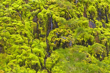 Trickling water on moss-covered cliff face, Westfjords, Iceland