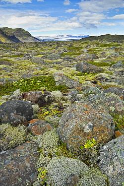Rocky tundra in summer, Skaftafell National Park, Iceland