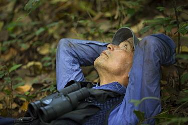 Chimpanzee (Pan troglodytes) biologist, Professor Matsuzawa, Bossou, Guinea