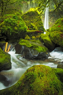 River and moss-covered boulders, Elowah Falls, Columbia River Gorge, Oregon