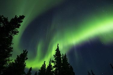Northern lights, Teklanika River, Denali National Park, Alaska