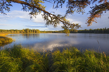 Taiga and lake at sunset, Grand Marais, Minnesota