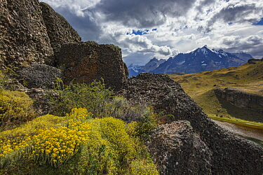 Wildflowers and mountain range, Cordillera Paine, Torres del Paine National Park, Chile