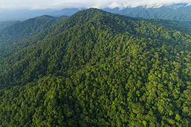 Mountains with choco rainforest, Utria National Park, Colombia