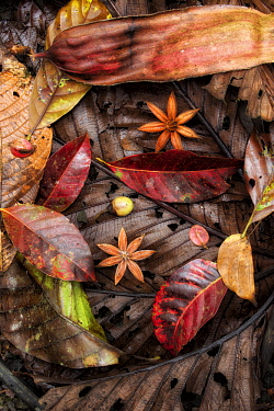 Fallen seeds and leaves in rainforest, Costa Rica