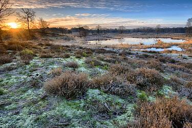 Marsh at sunrise, Hatertse Vennen, Netherlands