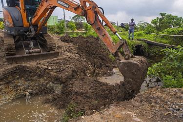 Excavator maintaining urban wetland, Diyasaru Park, Colombo, Sri Lanka