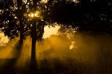 Miombo woodland at sunset, Kafue National Park, Zambia