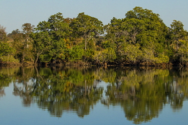 Miombo woodland along Kafue River, Kafue National Park, Zambia