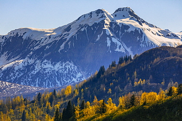 Taiga and snow-covered mountains in autumn, Glacier Bay National Park, Alaska