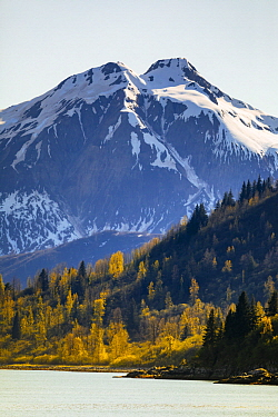 Taiga and coastal snow-covered mountains in autumn, Glacier Bay National Park, Alaska