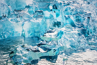 Ice, LeConte Bay, southeast Alaska