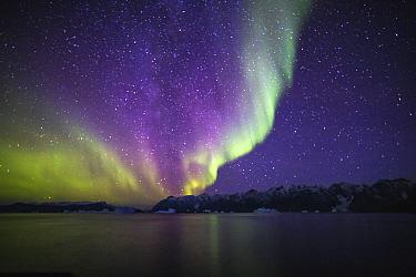 Aurora borealis over coastal mountains, Scoresby Sound, Greenland