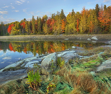 Trees in autumn, Thomas Bay, Mount Desert Island, Maine