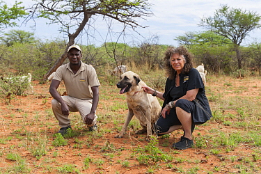 Anatolian Shepherd (Canis familiaris) livestock guarding dog, with Cheetah (Acinonyx jubatus) conservationist, Laurie Marker, and staff member, Cheetah Conservation Fund, Namibia