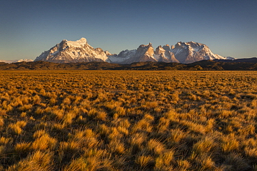 Shrubland and mountain, Paine Massif, Torres del Paine, Torres del Paine National Park, Patagonia, Chile