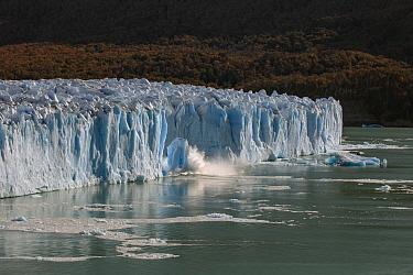 Ice calving from terminal moraine, Perito Moreno Glacier, Los Glaciares National Park, Patagonia, Argentina