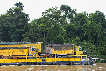 African Oil Palm (Elaeis guineensis) harvested fruit on trucks on barge, Sabah, Borneo, Malaysia