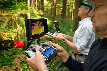 Marbled Murrelet (Brachyramphus marmoratus) biologists using drone to locate nests, Newport, Oregon