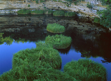 El Zacaton sinkhole or cenote with floating vegetation, near Aldama, Tamaulipas, Mexico  -  Patricio Robles Gil/ Sierra Madr