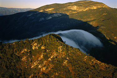 Fog rolling over cloud forest, Altas Cumbres Protected Area, Tamaulipas, Sierra Madre Oriental, northeast Mexico  -  Patricio Robles Gil/ Sierra Madr