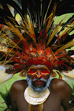 Aboriginal man wearing tribal headdress made with feathers from Bird-of-Paradise, Parrots and Lorikeets, Papua New Guinea  -  Patricio Robles Gil/ Sierra Madr