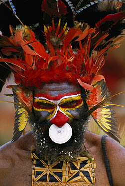Aboriginal man wearing tribal headdress with feathers from King of Saxony Bird of Paradise (Pteridophora alberti), Papua New Guinea  -  Patricio Robles Gil/ Sierra Madr