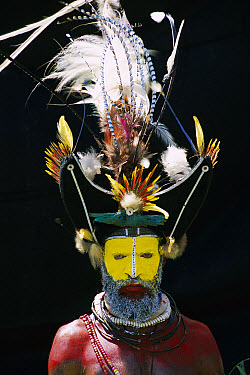 Huli man wearing a headdress made with feathers from Papuan Lorikeets (Charmosyna papou) and Birds-of-paradise, Papua New Guinea  -  Patricio Robles Gil/ Sierra Madr