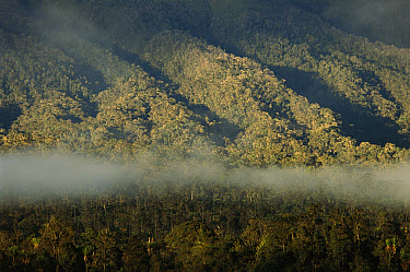 Cloud forest near Mt. Hagen, in the western highlands of central Papua New Guinea  -  Patricio Robles Gil/ Sierra Madr