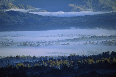 Morning fog in Tari Mountains, homeland of the Huli people, southern highlands of Papua New Guinea  -  Patricio Robles Gil/ Sierra Madr