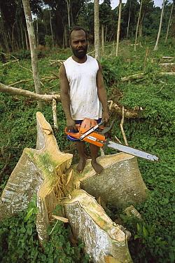 Local man with a chain saw cutting down rainforest trees for lumber, northern Espiritu Santo Island, Vanuatu  -  Patricio Robles Gil/ Sierra Madr