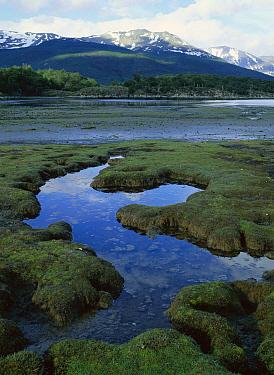 Bay at low tide, Tierra del Fuego, Patagonia, Argentina  -  Patricio Robles Gil/ Sierra Madr