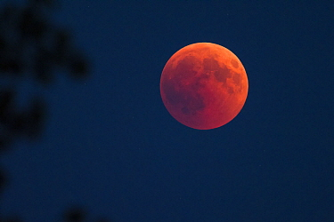 Total lunar eclipse, blood moon, Upper Bavaria, Germany