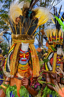 Gaim Engual Kuruware tribe men performing with massive head dresses made from human hair and adorned with various birds of paradise feathers, Mount Hagen Show, Western Highlands, Papua New Guinea