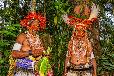 Indigenous women getting ready to perform, Paiya Village Mini Show, Western Highlands, Papua New Guinea